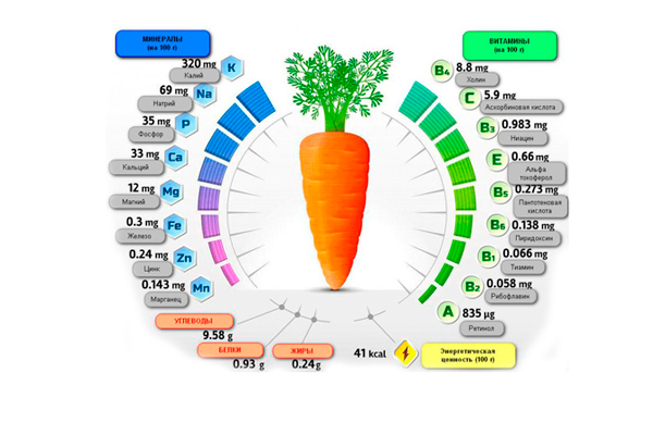 Полезные вещества в составе моркови