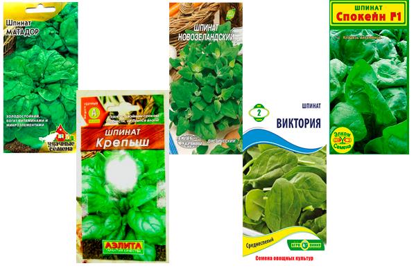Семена популярных сортов шпината