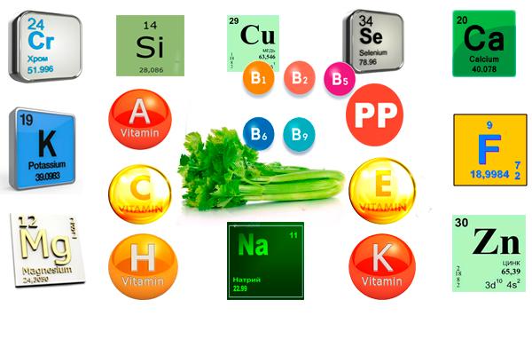 Полезные вещества в составе сельдерея