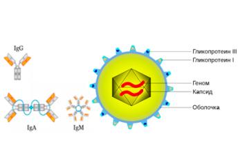 antitela-k-citomegalovirusu