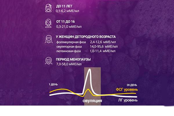 Норма концентрации гормона ЛГ в зависимости от возраста женщины